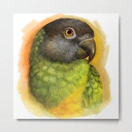 Senegal parrot realistic painting Metal Print