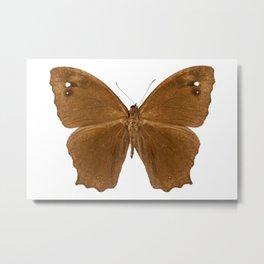 "Butterfly species Melanitis leda ""Common Evening Brown"" Metal Print"