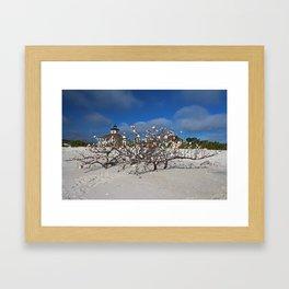 Gasparilla After Irma Framed Art Print