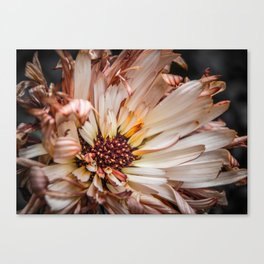 The End of Beauty Canvas Print