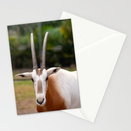 Scimitar Horned Oryx Looking at Me Stationery Cards