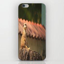 Meerkat Funny Observer #decor #society6 iPhone Skin
