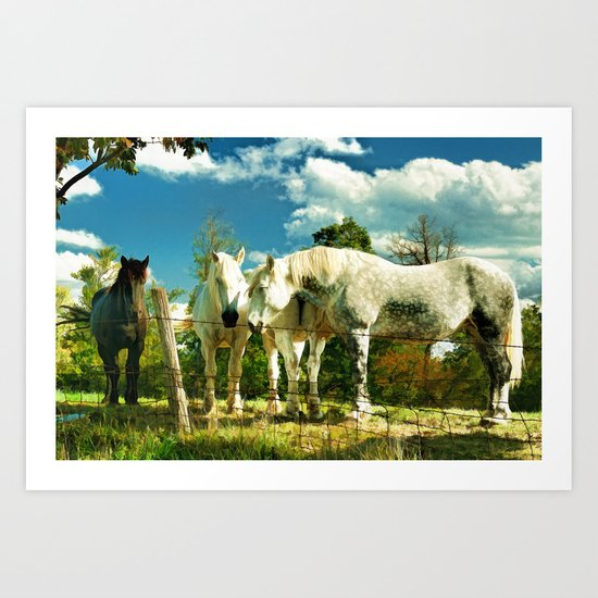 Amish work horses Art Print