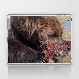 Hungry Alaskan Grizzly Bear - Eating Raw Meat Laptop & iPad Skin