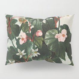 The Oblique-Leaved Begonia from The Temple of Flora (1807) by Robert John Thornton Pillow Sham
