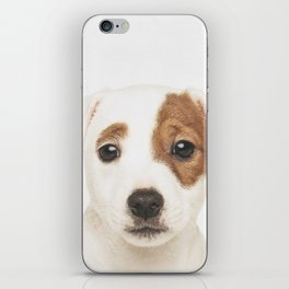 Jack Russell Puppy iPhone Skin