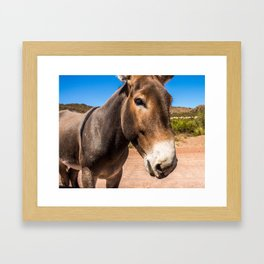 Approach of a donkey in its natural habitat Framed Art Print