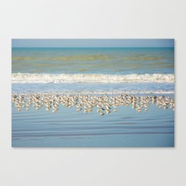 Birds, reflections in water Canvas Print