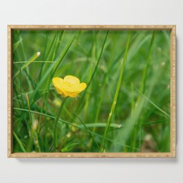 Yellow buttercup in summer Serving Tray