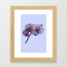 Vibrant stem of orchids on blue Framed Art Print