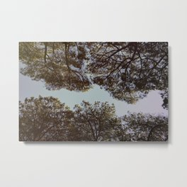 Stone pine trees Metal Print