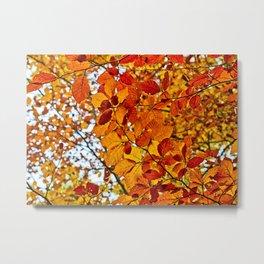 Colors of fall Metal Print