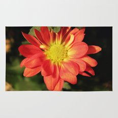 Pretty holiday orange daisy flower. Floral nature garden photography. Rug