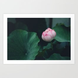 Flower Photography by Jerry Wang Art Print
