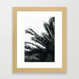 Palm 1 Framed Art Print