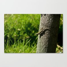 Checking Out Canvas Print