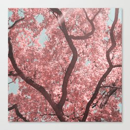 pink sunday Canvas Print