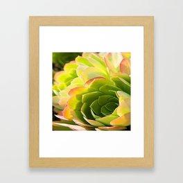 BEAUTIFUL SUCCULENT Framed Art Print