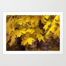 Autumn leaves 7258 Art Print