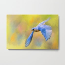 Bluebird Spring Flight Metal Print