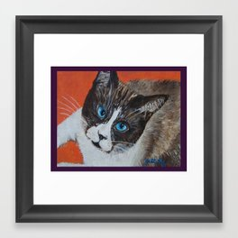 Rastus the Snowshoe cat Framed Art Print