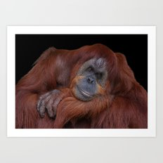 Unconcerned Male Orangutan Art Print