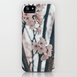 Cherry Blossom Season iPhone Case