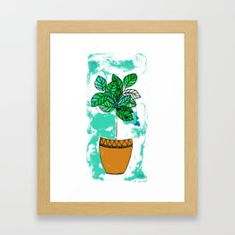 Indoor plant in pot Framed Art Print