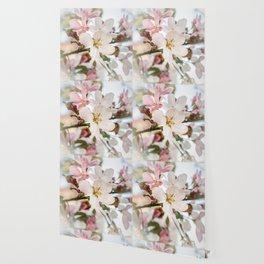 Beautiful apple blossom macro Wallpaper