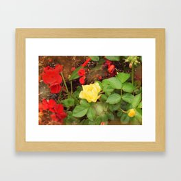 Yellow Rose With Red Geranium Framed Art Print