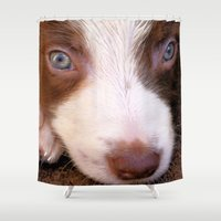 border collie Shower Curtains featuring Border Collie Tan and White dog pup by Brian Raggatt