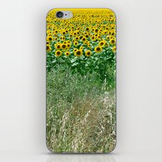 sunflower field iPhone & iPod Skin