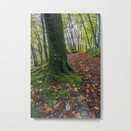 Autumn Forest Walk Metal Print