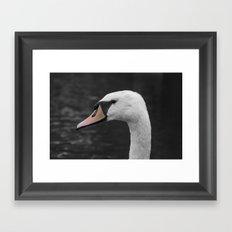 Swan Portrait 4 Framed Art Print
