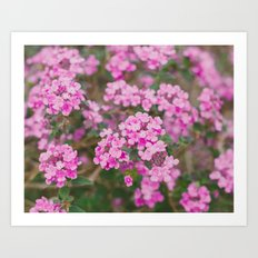 Purple Flowers in the Field Art Print