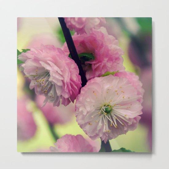 Pretty pink Cherry Metal Print