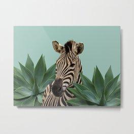 Zebra between Agave Leaves Metal Print