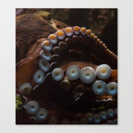 beware of octopus Canvas Print