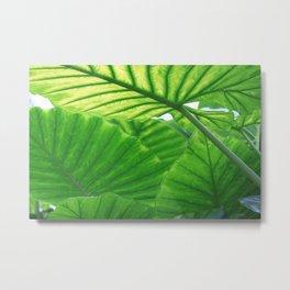 tropic leaves Metal Print