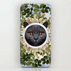 Chartreux iPhone & iPod Skin