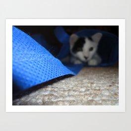 Cat's Back in the Bag Art Print