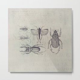 Vintage Beetles And Bugs Metal Print