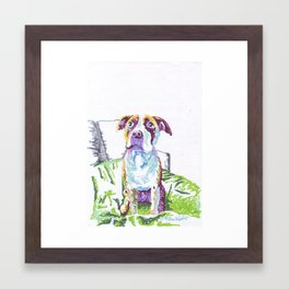 Charlotte the Pitbull Framed Art Print