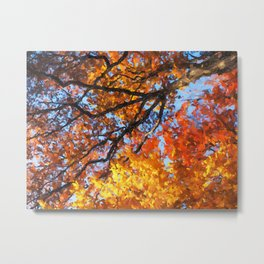 Autumnal colors in forest Metal Print