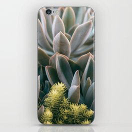 Graptoveria Study #3 iPhone Skin