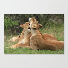 Tenderness In The Wild Canvas Print