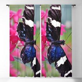 Wingspan Blackout Curtain