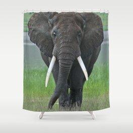 Ngorongoro Ele Shower Curtain