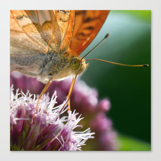 Butterfly macro 67 Canvas Print