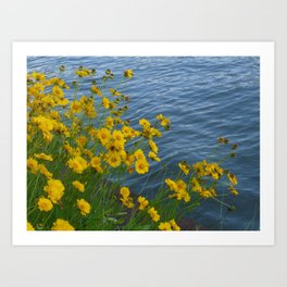 Yellow Flowers by the Water Art Print